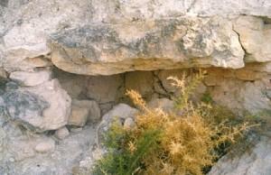 ARQUEOLOGIA necropolis