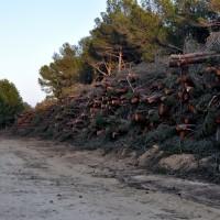 biomasa_15