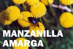 manzanilla amarga