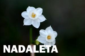 nadaleta4