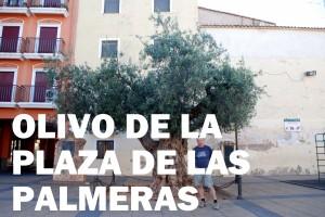 olivo plaza las palmeras