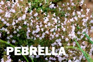 pebrilla1-001