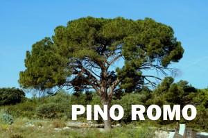 pino romo
