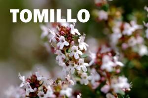 tomillo1