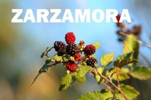 zarzamora1