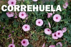 Correhuela