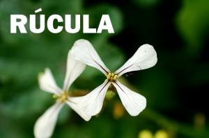 Rucula2