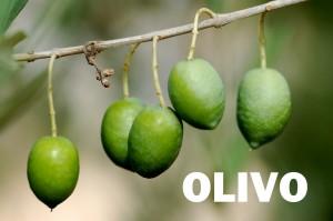 olivo20