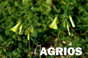 agrios3