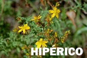 hipérico6