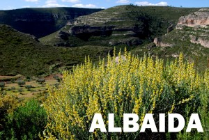 albaida8