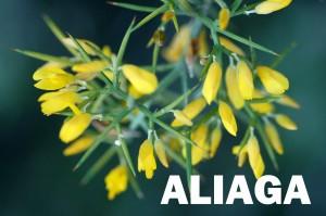 aliaga1