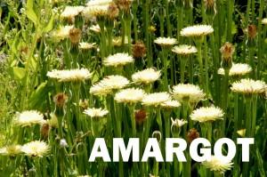 amargot6