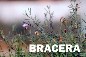 bracera8