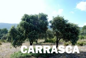 carrasca36
