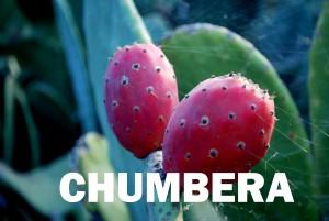 chumbera22