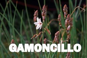 gamoncillo8