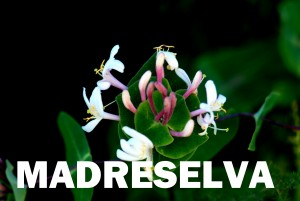 madreselva10
