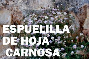 espuelilla10