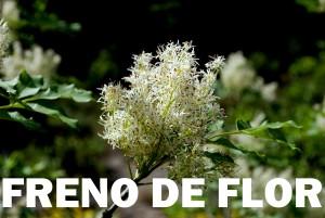 fresno de flor8