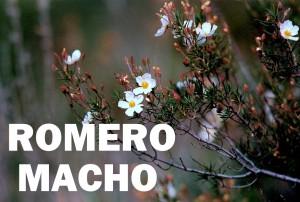 romero macho9