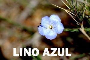 lino azul2