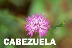 cabezuela-flor-roja