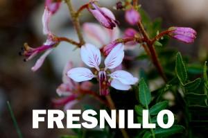 Fresnillo 2