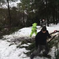 corta pinos 21.01.2017 (12)