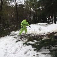 corta pinos 21.01.2017 (14)