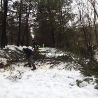 corta pinos 21.01.2017 (22)