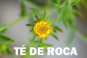 té de roca flor color amarilla